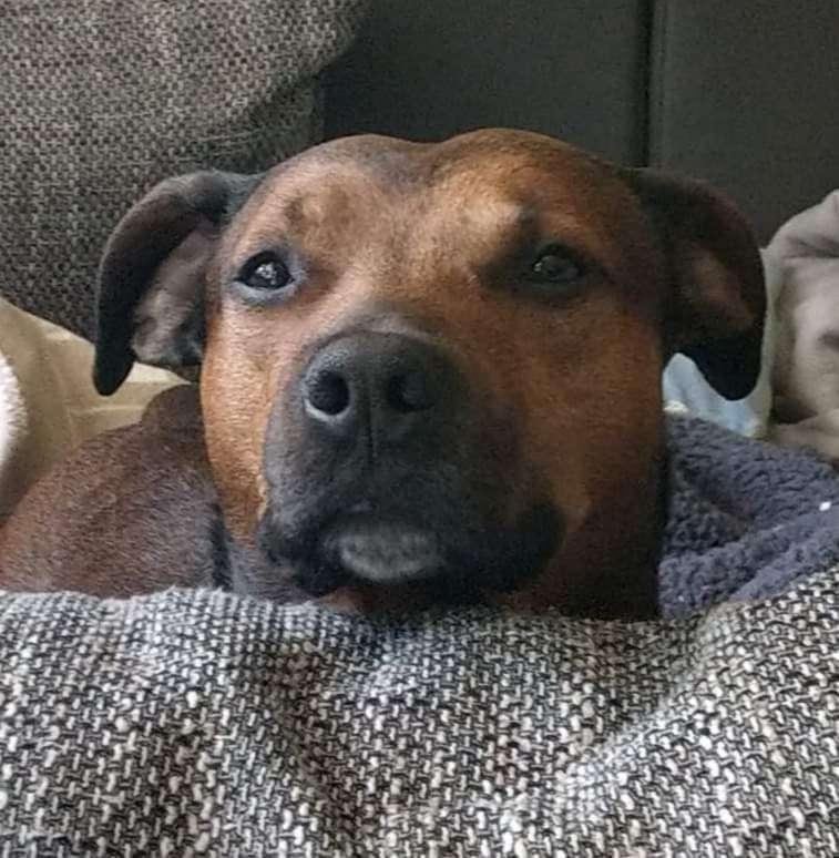 Der gutste heißt Rufus weil sie ihn im Tierheim so genannt haben und wir ihn nicht wieder umgewöhnen wollten 😁