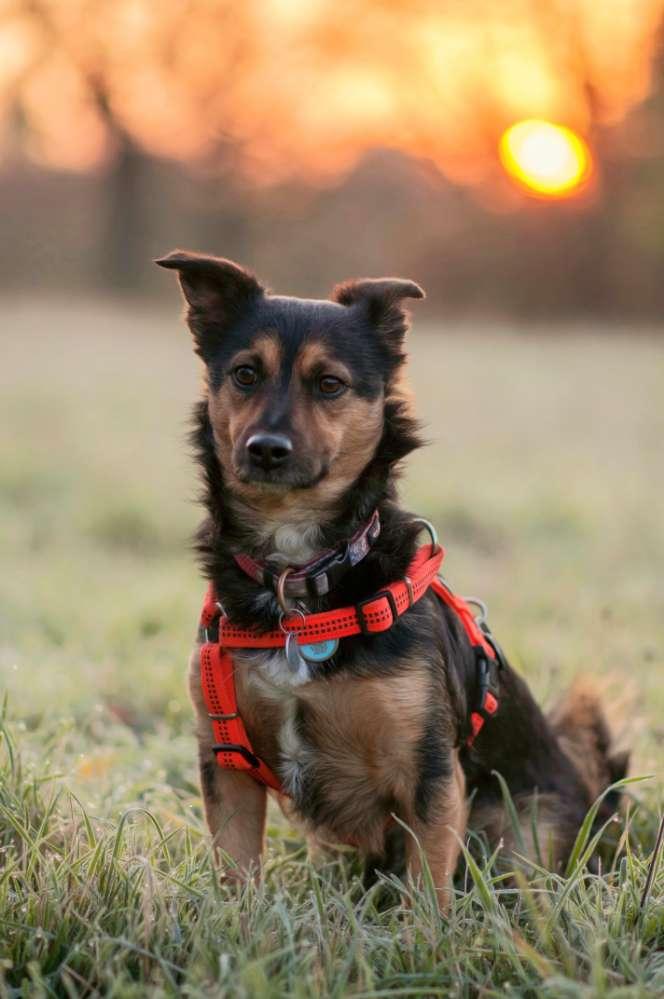 Club der Rumänen (Alle Hunde aus dem rumänischen Tierschutz, wo seid Ihr?)