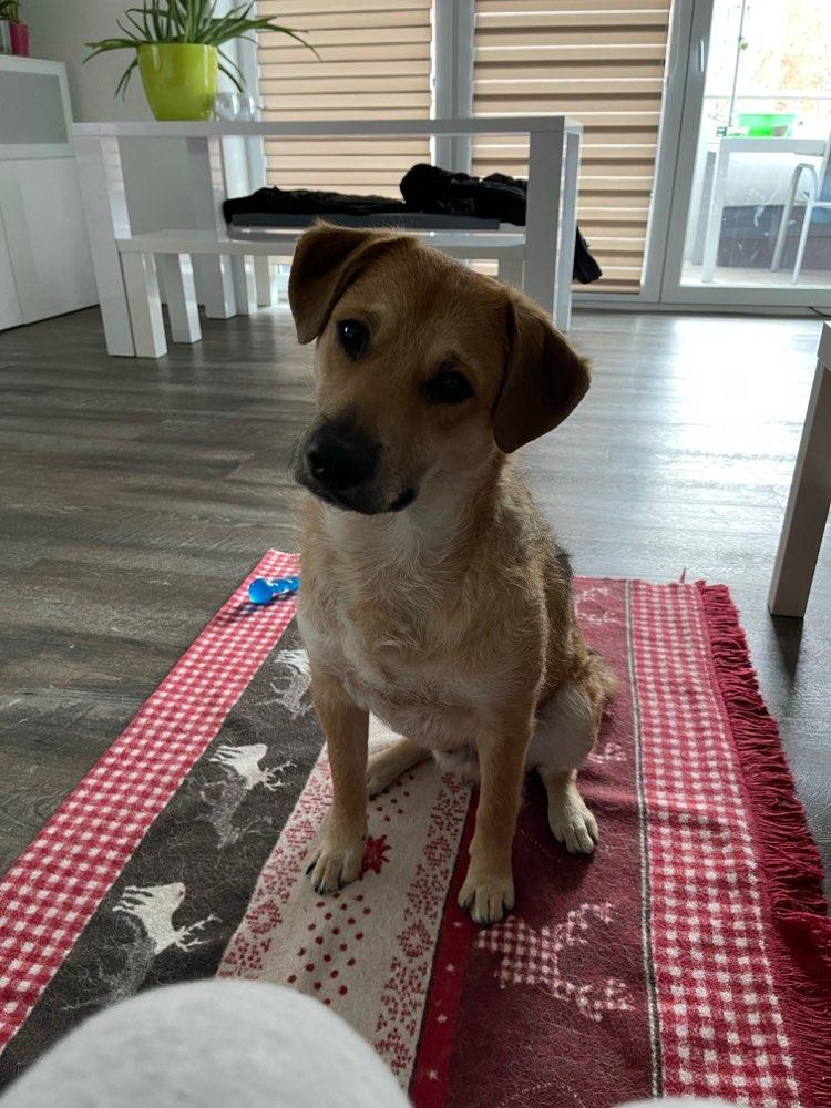 Hundekumpel in Kaltenkirchen gesucht