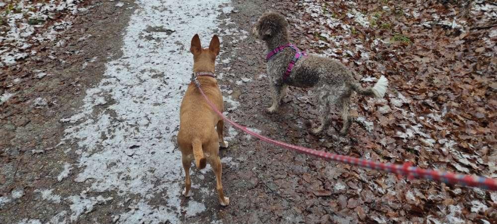 Die eine läuft im Wald meist ohne Leine. Klappt sehr gut. Die andere ist eine Spanierin mit hohem Jagdtrieb und außerdem Angsthund und deshalb immer angeleint.
