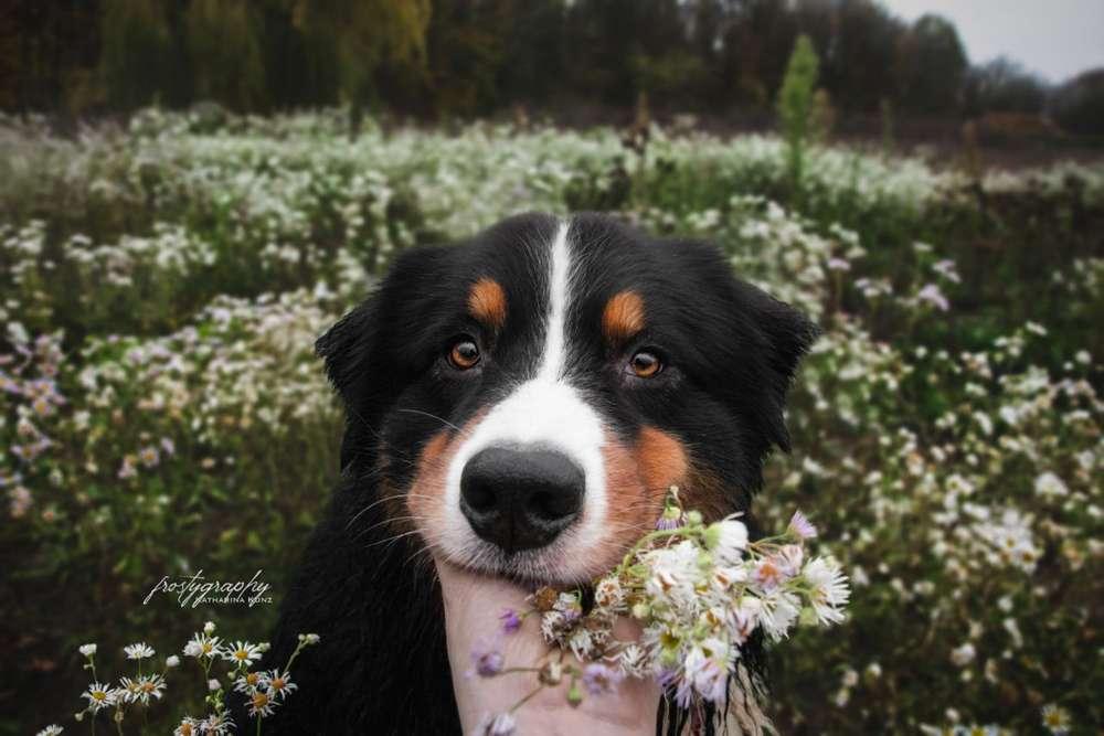 Foto's und Hundemodels